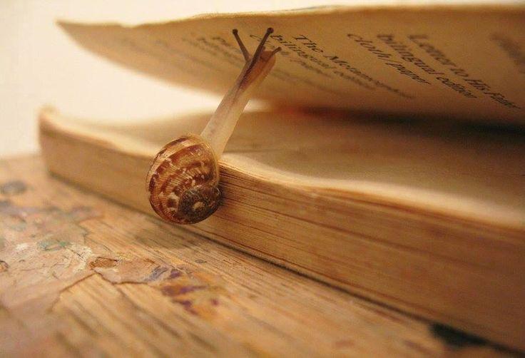 Медленное чтение